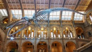 NATURAL HISTORY MUSEUM: Learn about the past at the Natural History Museum