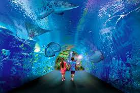 CAIRNS AQUARIUM: Meet and interact with sea creatures