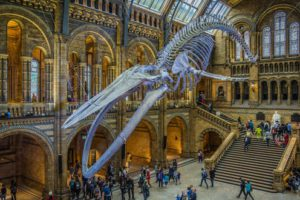 MUSEUMS: Museums are starting to move online due to the pandemic